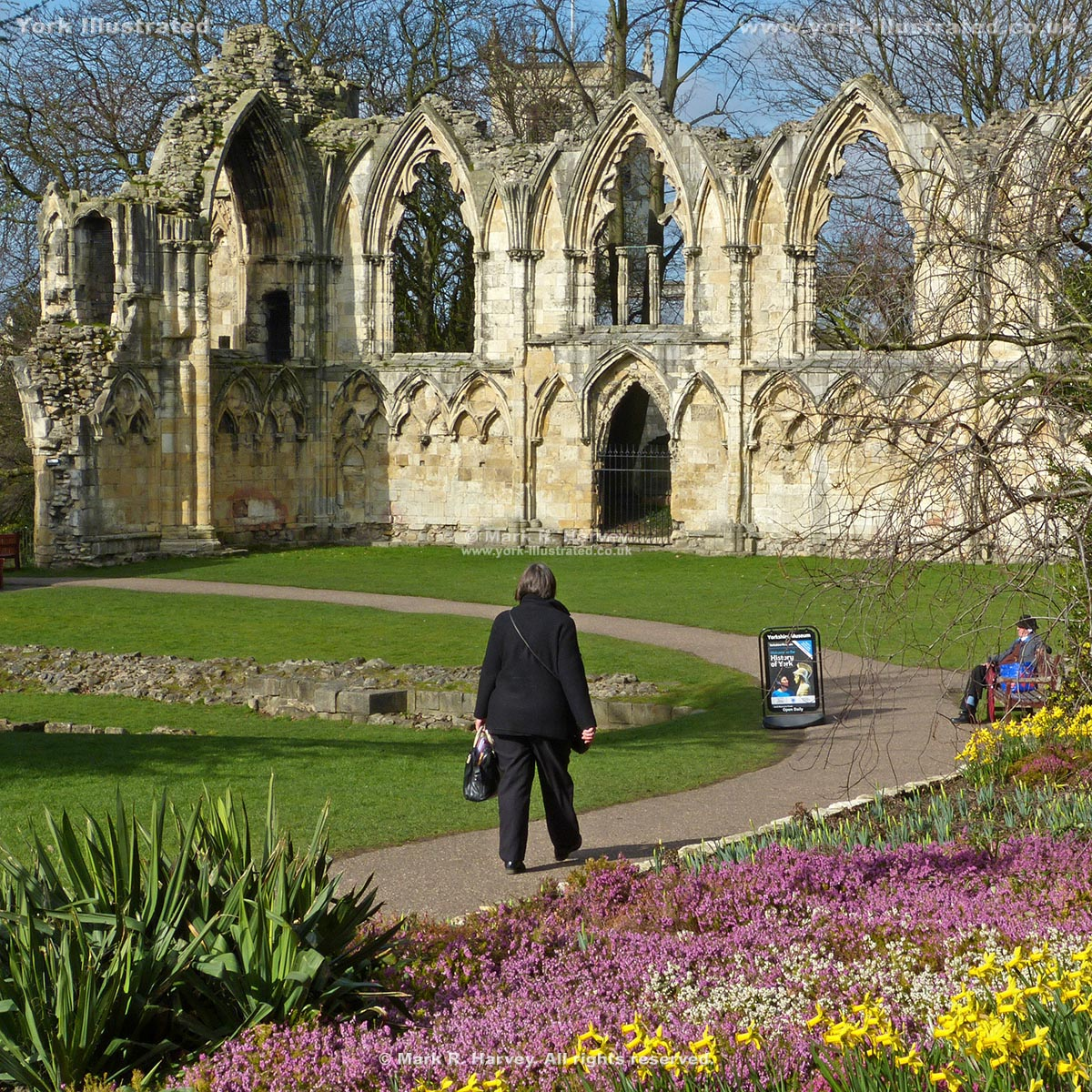 Photograph: Ruined church of St Mary's Abbey, heather and daffodils in Museum Gardens, York.
